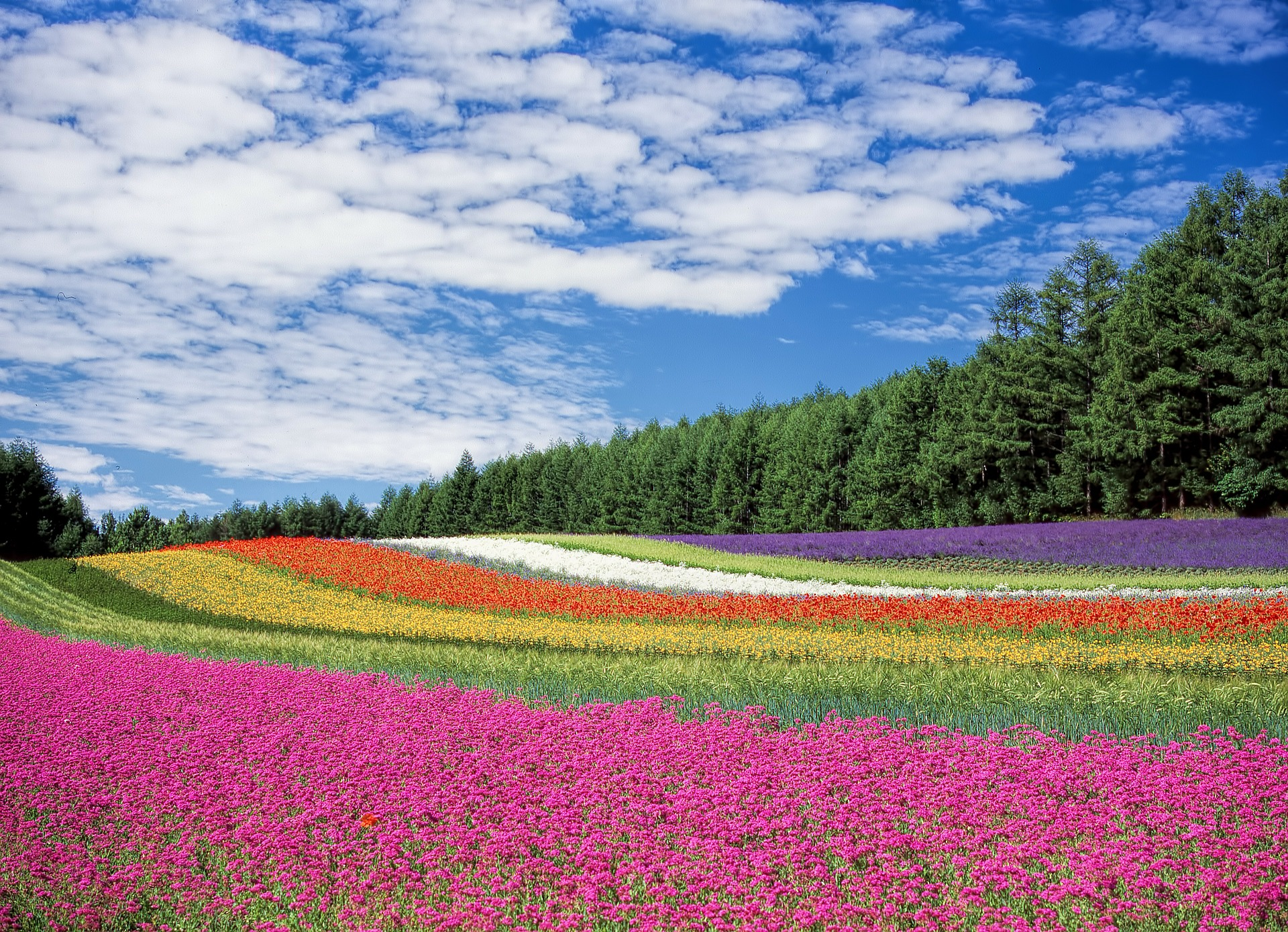 Nature, champ de fleurs © Pixabay CC0 - DeltaWorks