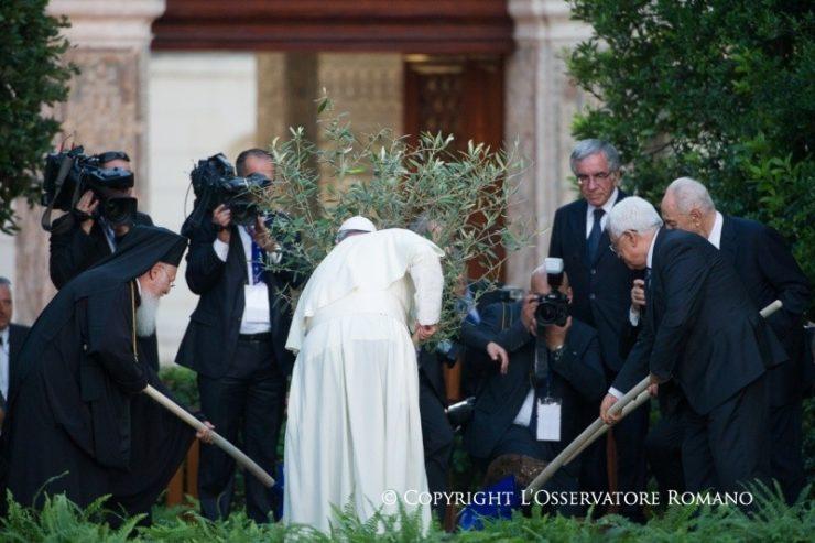 L'olivier de la paix 8 juin 2014 © L'Osservatore Romano