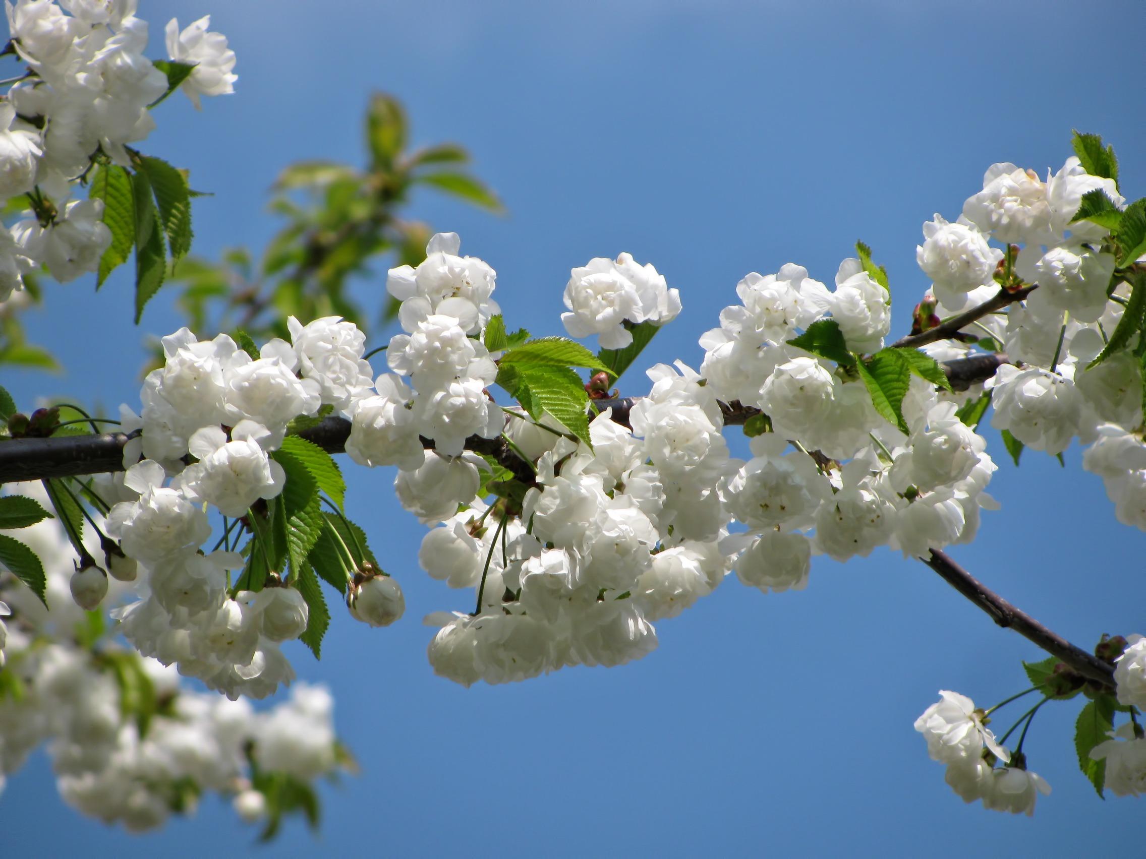 fleurs © Pixabay CC0 - jingoba