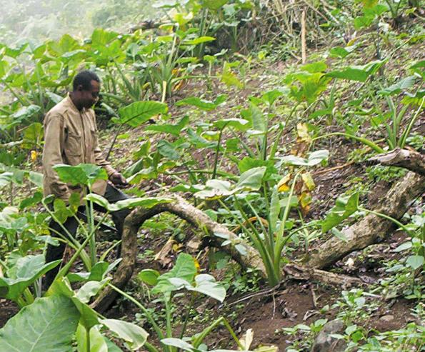 Agriculteur du Cameroun © Wikimedia commons