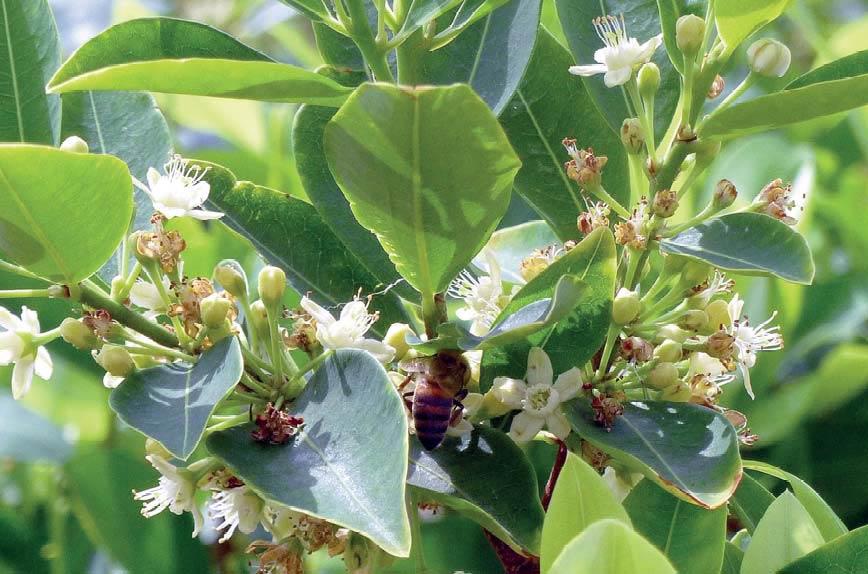 Plante de coca © UNODC