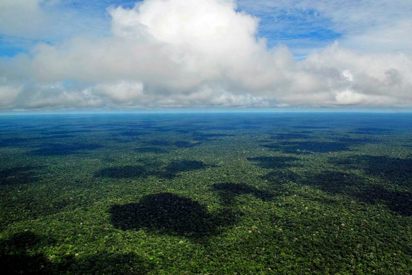Forêt amazonienne © Wikimedia commons / Neil Palmer