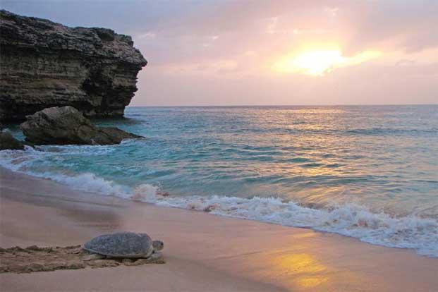 L'océan et la tortue, wikimedia commons