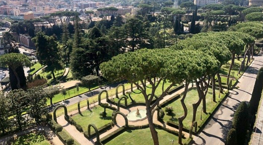 Pins des Jardins du Vatican ©Vatican News